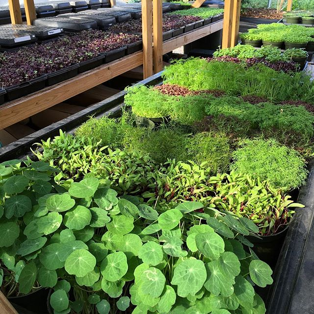 We grow over 20 varieties of microgreens