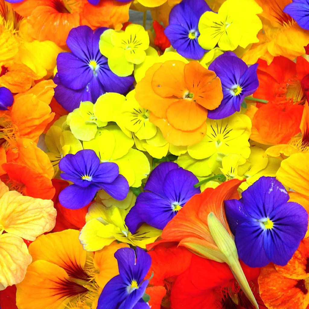 Mixed edible flowers