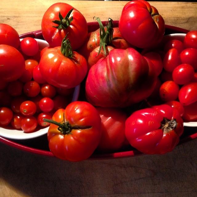 Ripe heirloom tomatoes