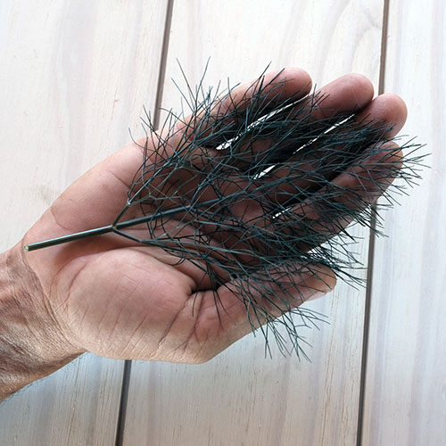bronze fennel in hand