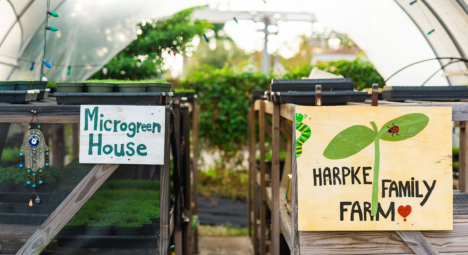 the harpke greenhouse