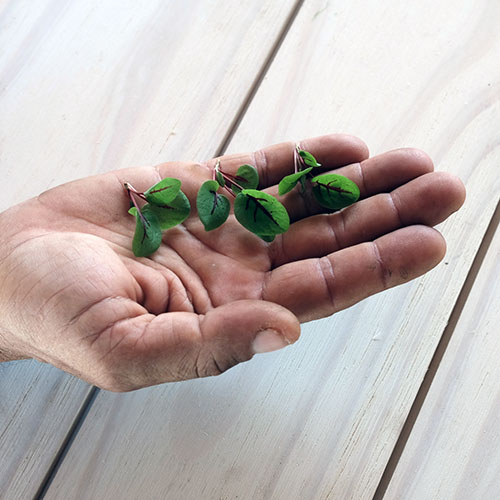 red-veined sorrel in hand